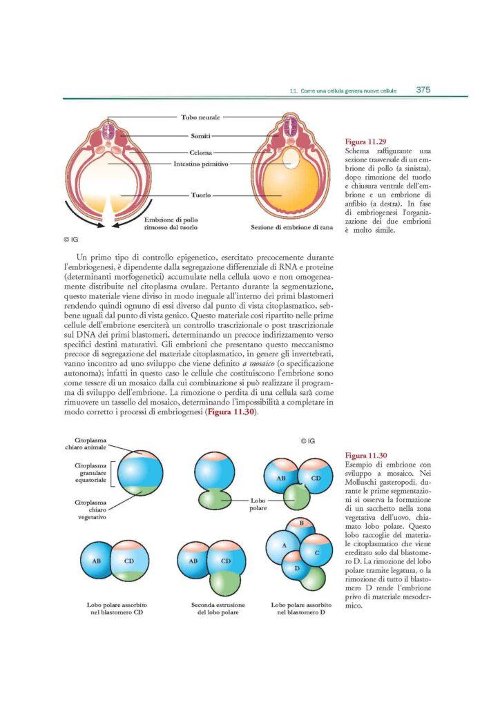 https://www.idelsongnocchi.com/shop/wp-content/uploads/2021/02/Dini_selezione-sito_Pagina_12-724x1024.jpg
